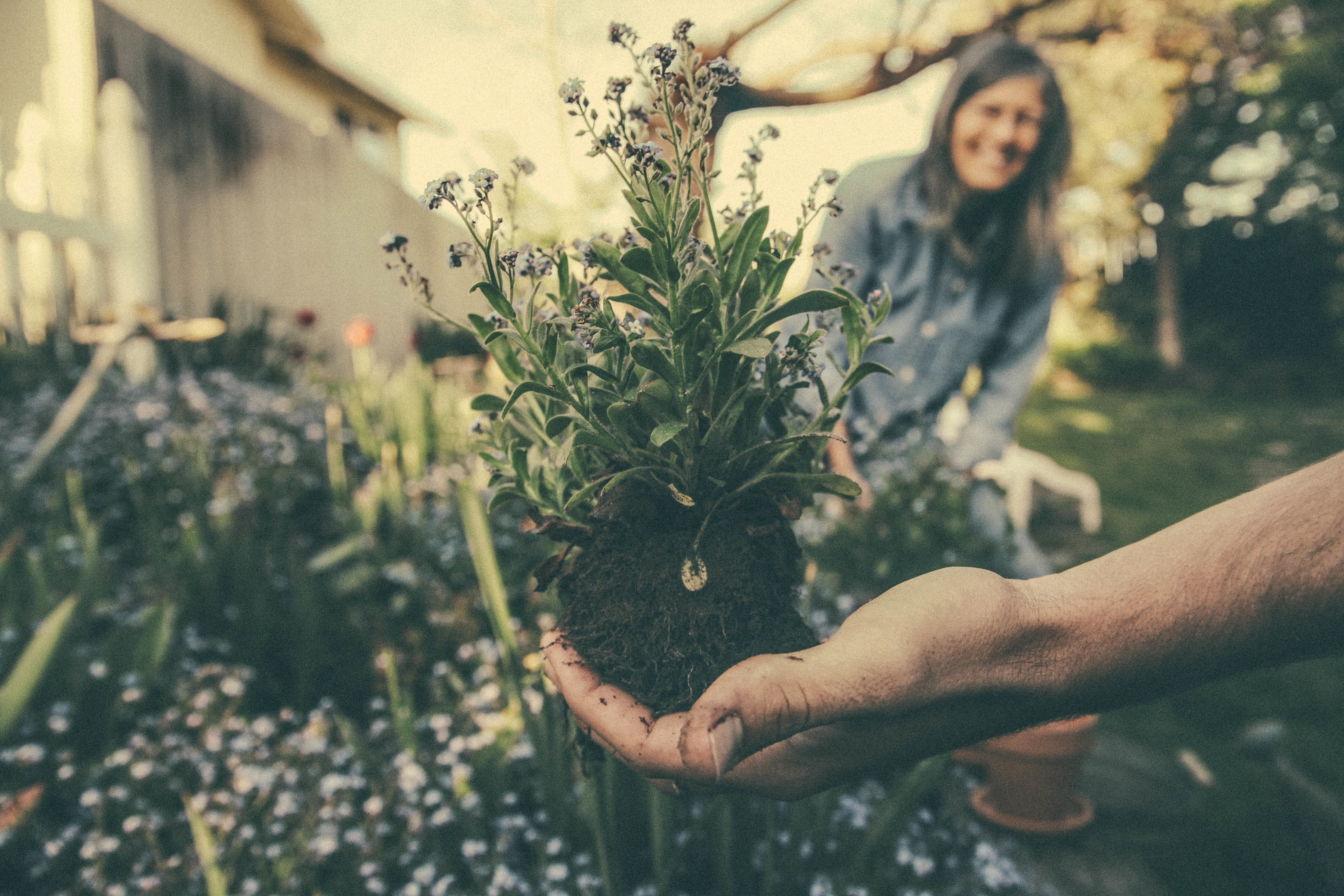 4 Priceless Tips To Avoid Pain While Gardening